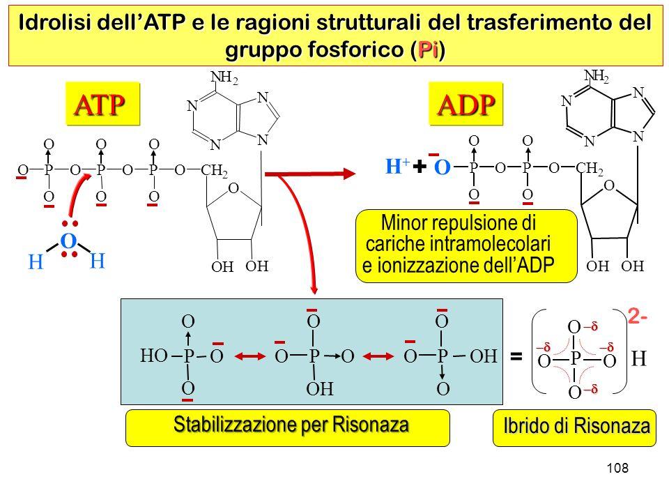 Idrolisi dell'ATP e le ragioni strutturali del trasferimento del gruppo fosforico (Pi)
