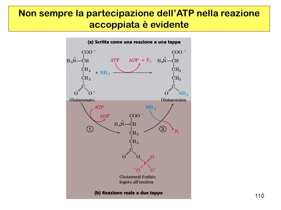 Non sempre la partecipazione dell'ATP nella reazione accoppiata è evidente