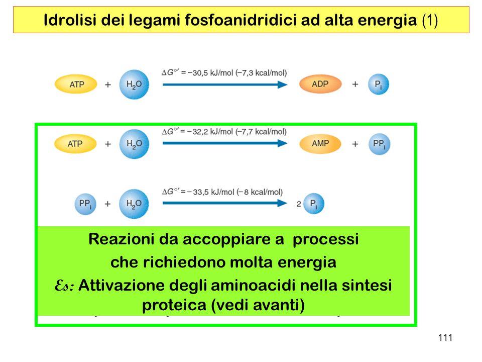 Idrolisi dei legami fosfoanidridici ad alta energia (1)