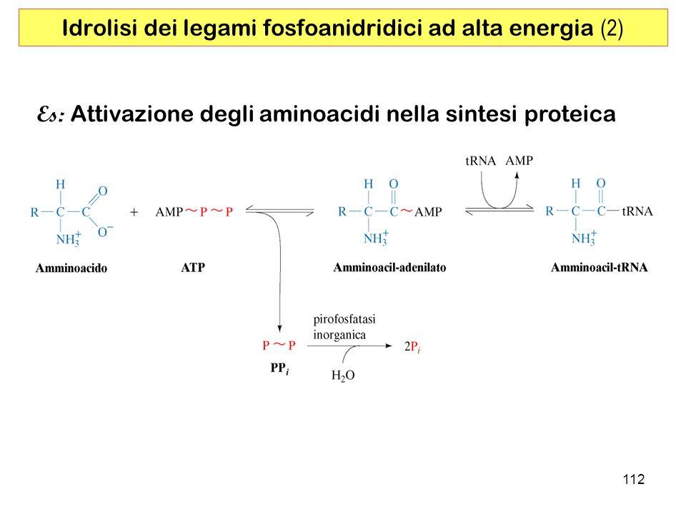 Idrolisi dei legami fosfoanidridici ad alta energia (2)