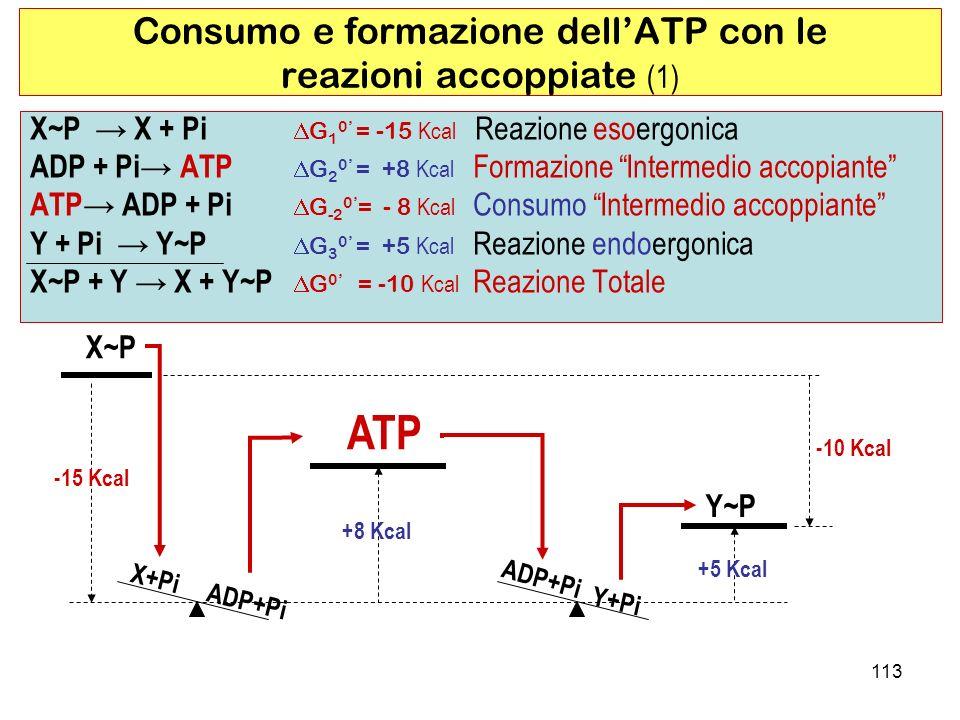 Consumo e formazione dell'ATP con le reazioni accoppiate (1)