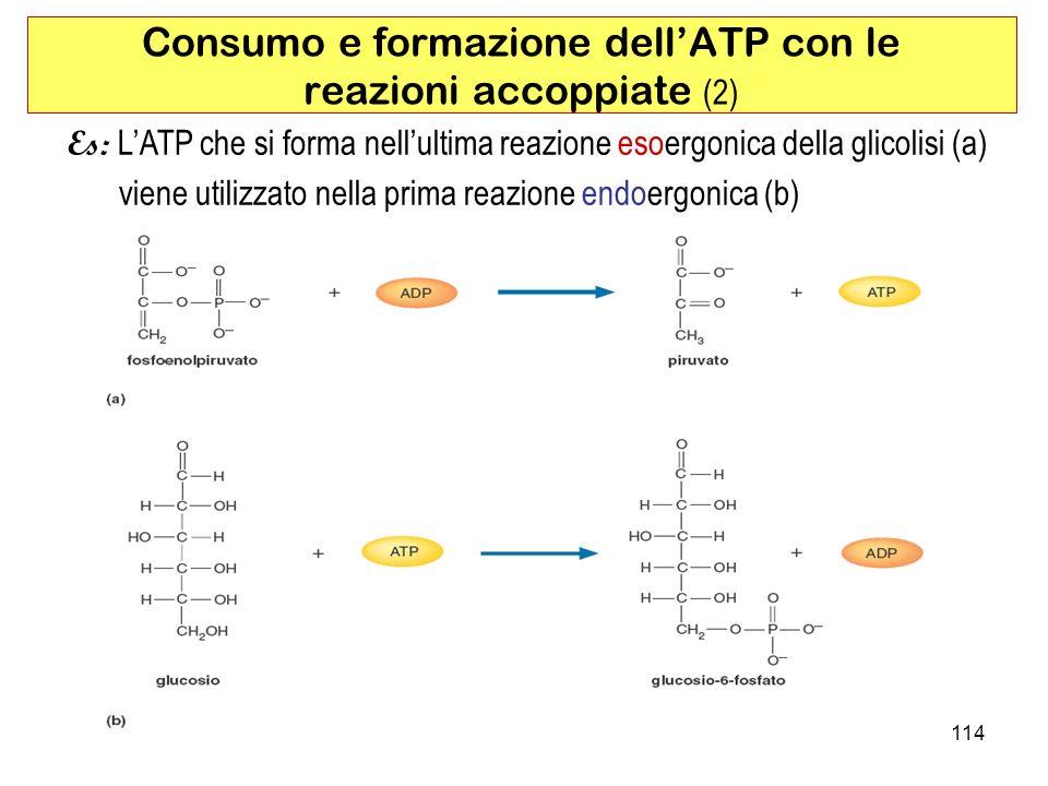 Consumo e formazione dell'ATP con le reazioni accoppiate (2)