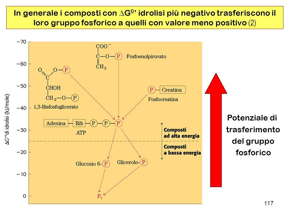 In generale i composti con DG0' idrolisi più negativo trasferiscono il loro gruppo fosforico a quelli con valore meno positivo (2)