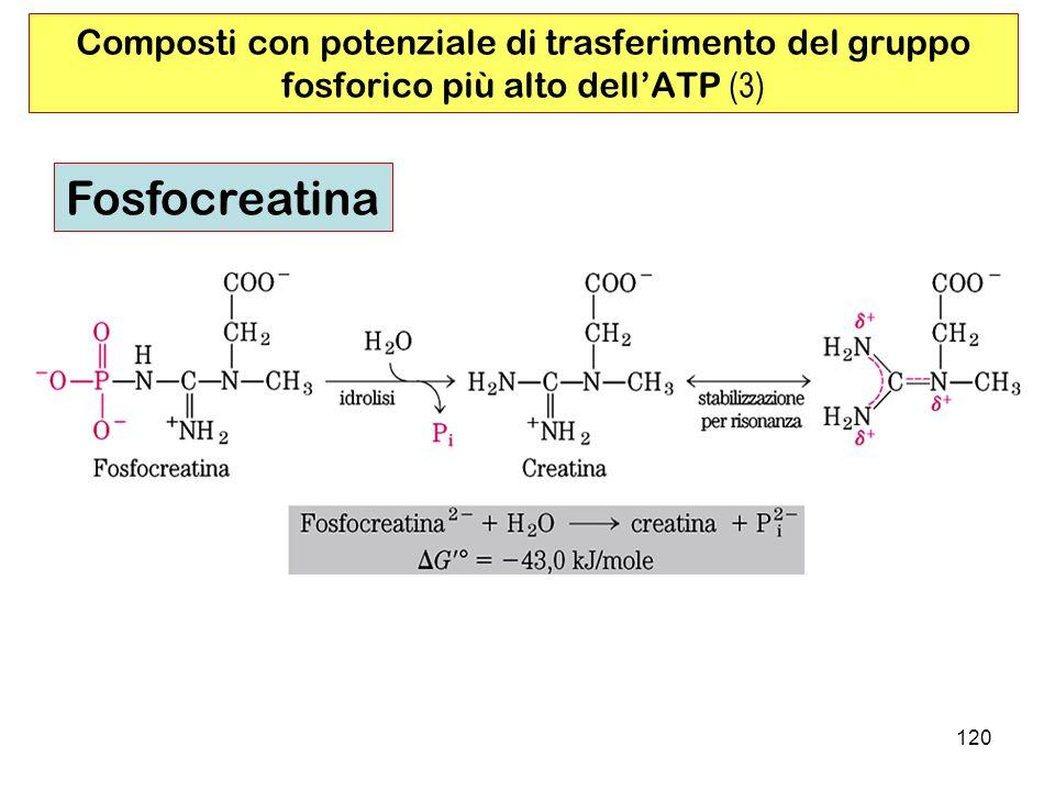 Composti con potenziale di trasferimento del gruppo fosforico più alto dell'ATP (3)