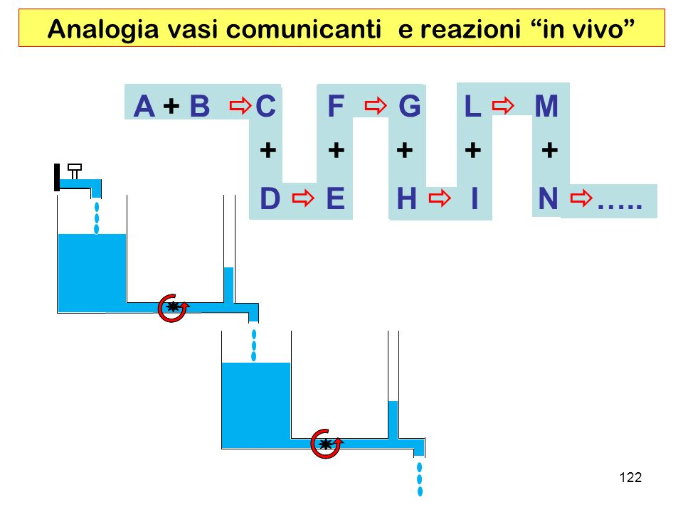 Analogia vasi comunicanti e reazioni in vivo