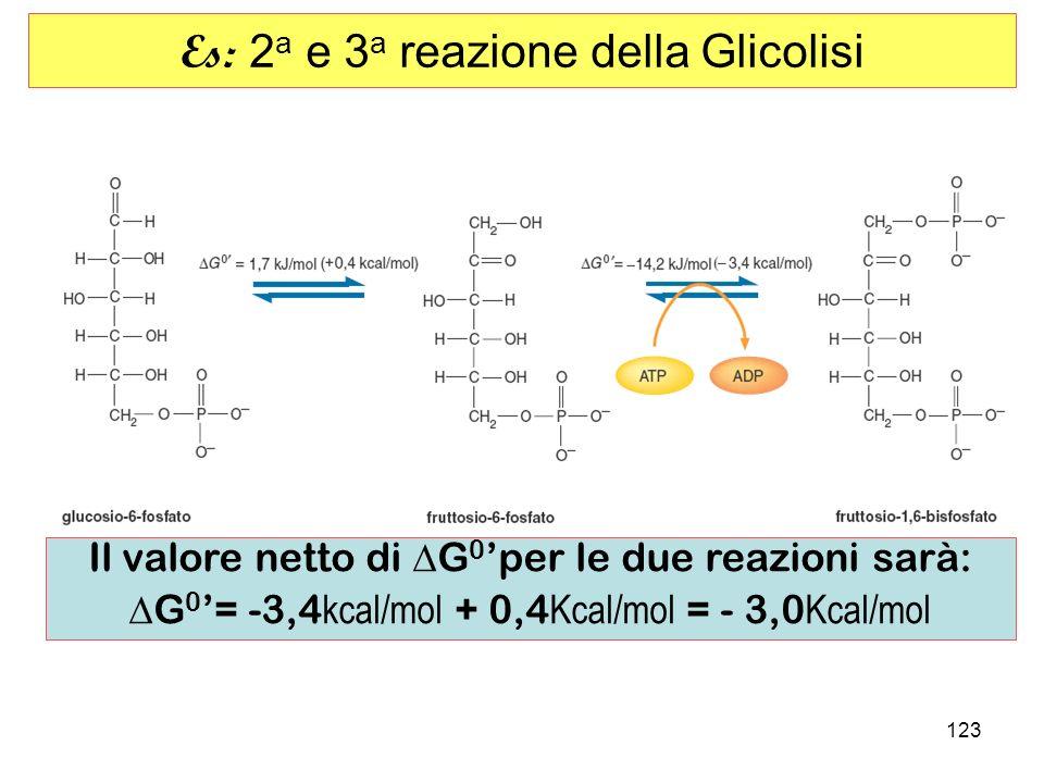 Es: 2a e 3a reazione della Glicolisi