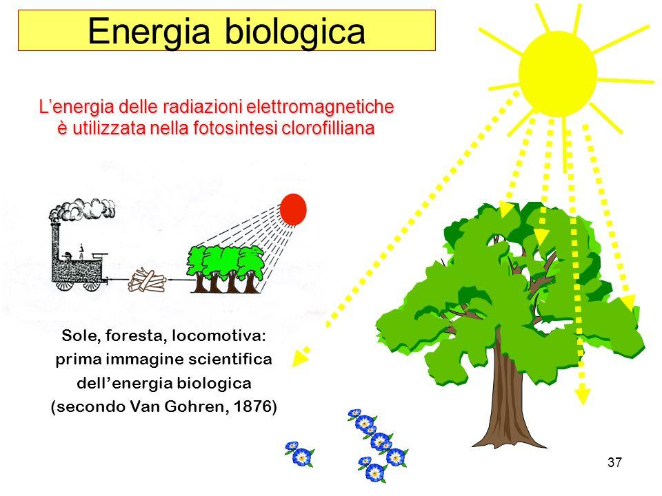 Energia biologica L'energia delle radiazioni elettromagnetiche