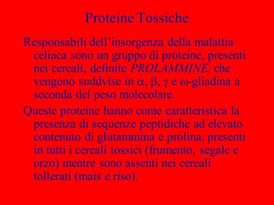 Proteine Tossiche