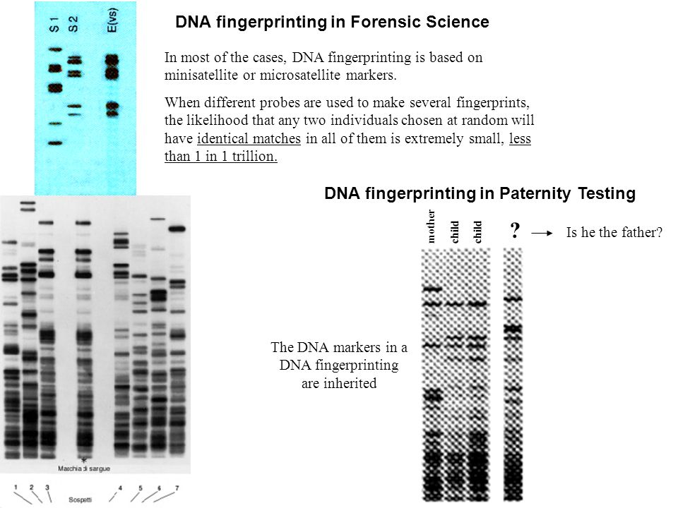 The DNA markers in a DNA fingerprinting are inherited