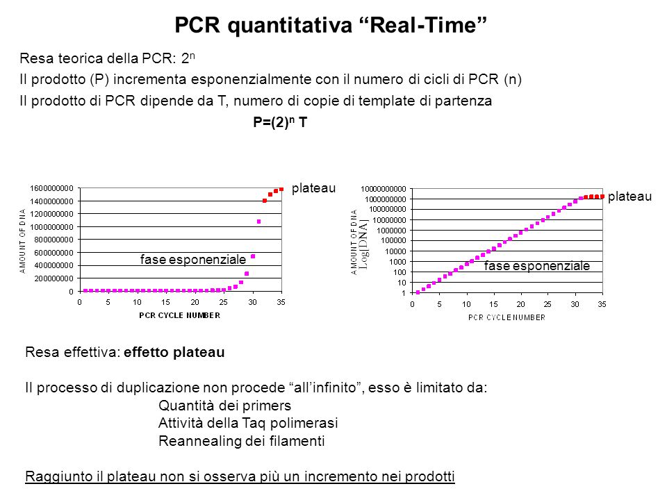 PCR quantitativa Real-Time