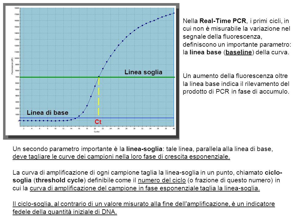 Nella Real-Time PCR, i primi cicli, in cui non è misurabile la variazione nel segnale della fluorescenza, definiscono un importante parametro: la linea base (baseline) della curva.