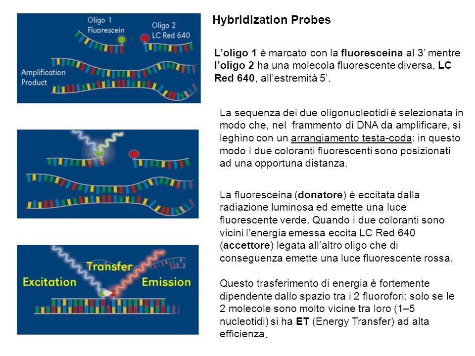 Hybridization Probes L'oligo 1 è marcato con la fluoresceina al 3' mentre.