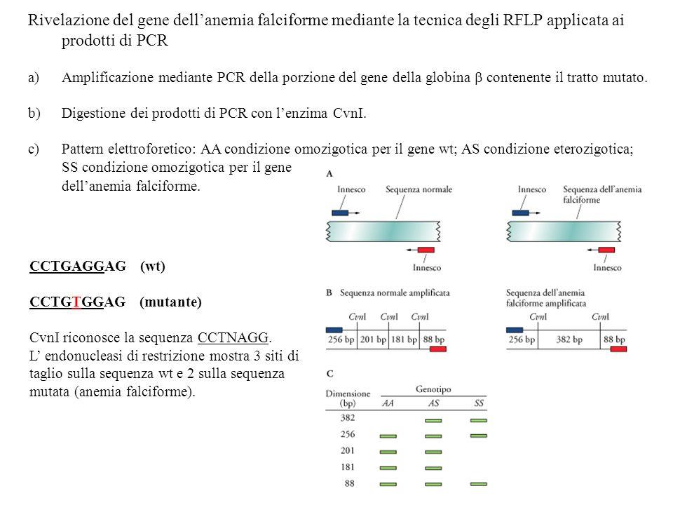 Rivelazione del gene dell'anemia falciforme mediante la tecnica degli RFLP applicata ai prodotti di PCR