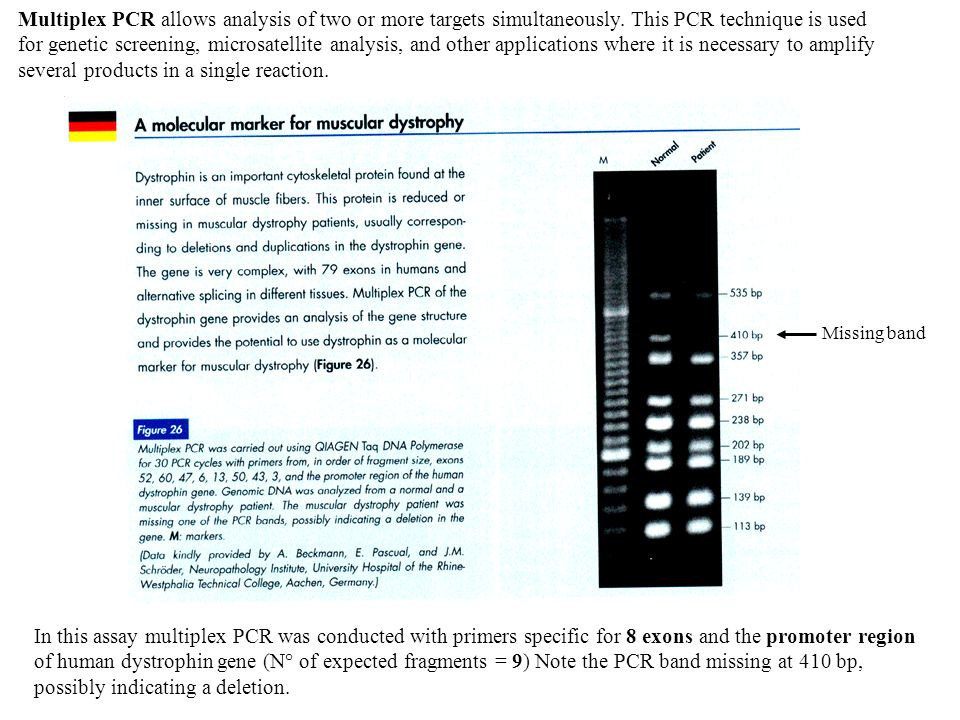 Multiplex PCR allows analysis of two or more targets simultaneously