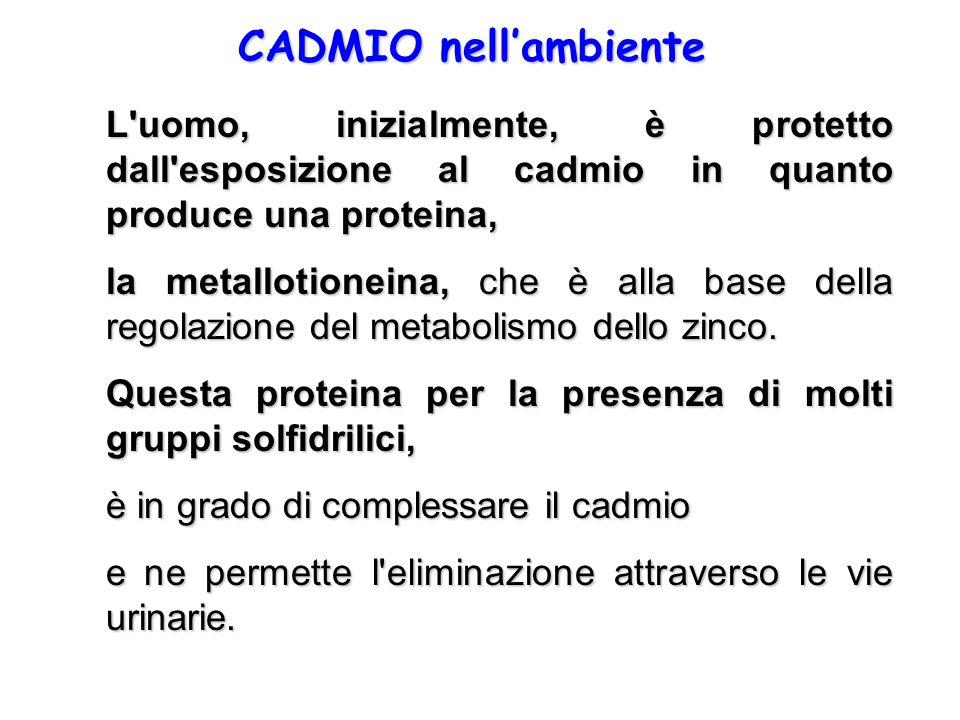 CADMIO nell'ambiente L uomo, inizialmente, è protetto dall esposizione al cadmio in quanto produce una proteina,