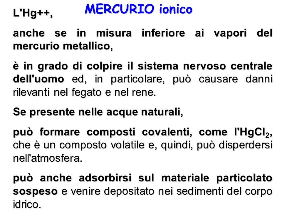 MERCURIO ionico L Hg++, anche se in misura inferiore ai vapori del mercurio metallico,