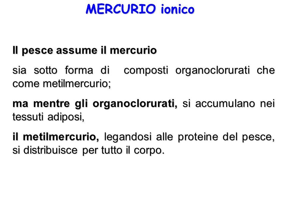 MERCURIO ionico Il pesce assume il mercurio
