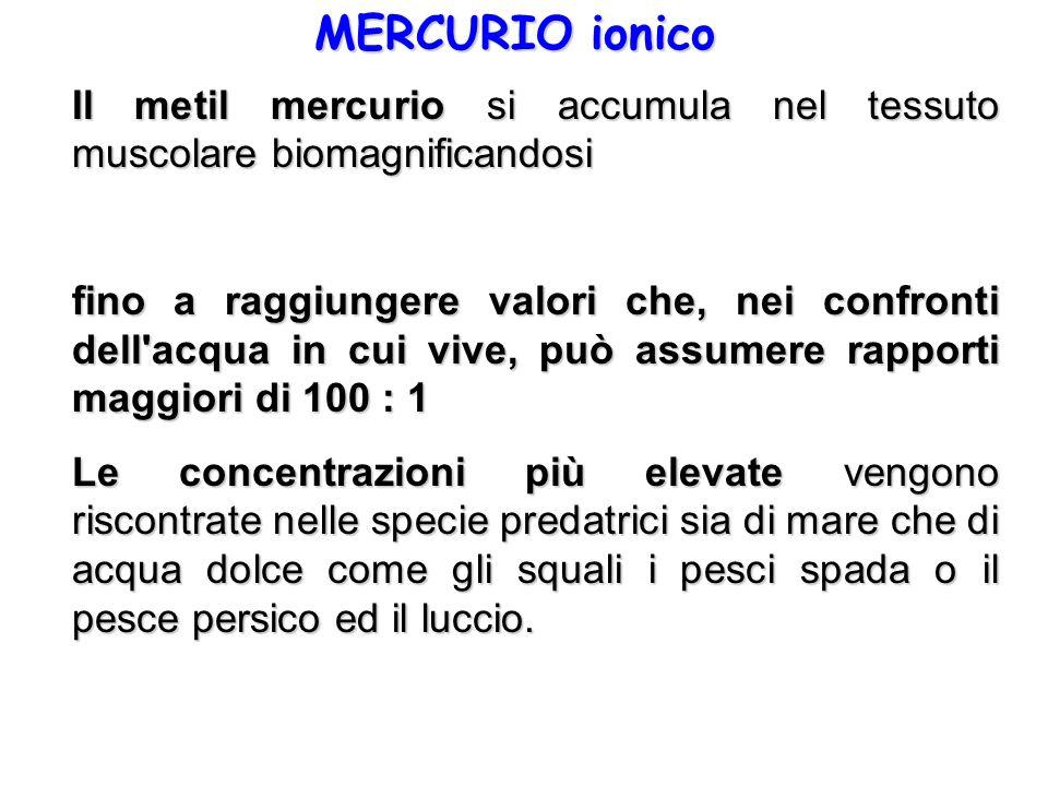 MERCURIO ionico Il metil mercurio si accumula nel tessuto muscolare biomagnificandosi.