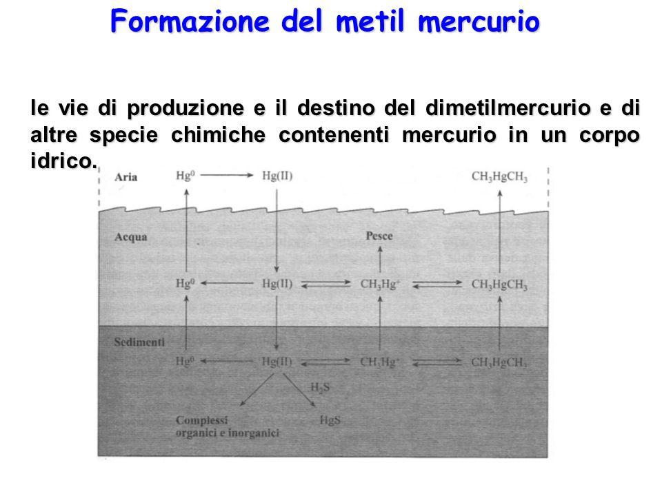 Formazione del metil mercurio