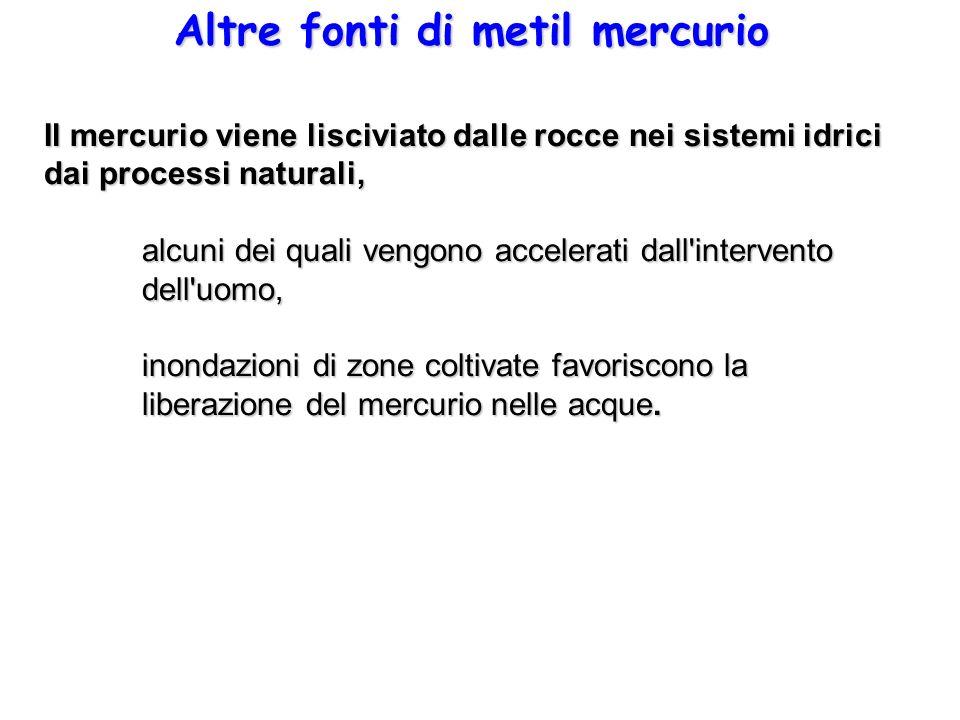 Altre fonti di metil mercurio