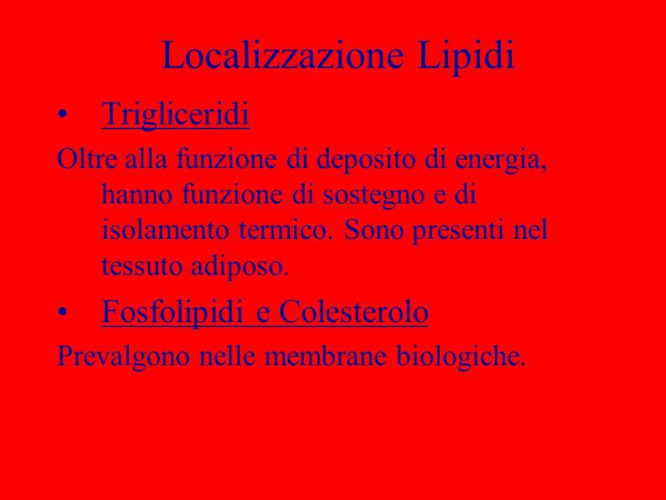 Localizzazione Lipidi