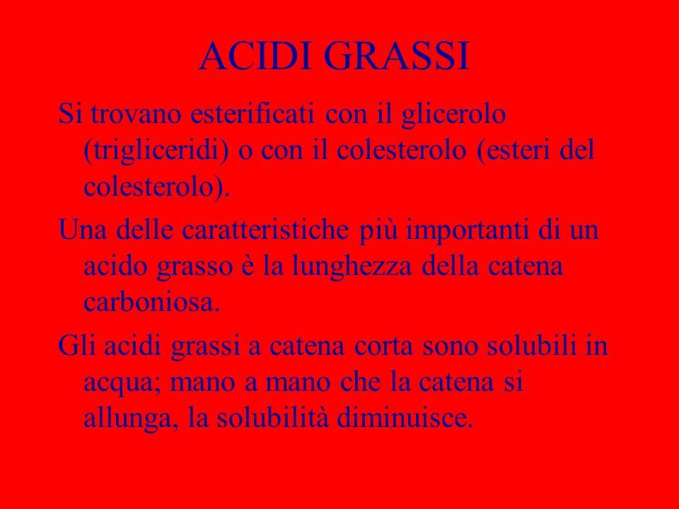 ACIDI GRASSI Si trovano esterificati con il glicerolo (trigliceridi) o con il colesterolo (esteri del colesterolo).