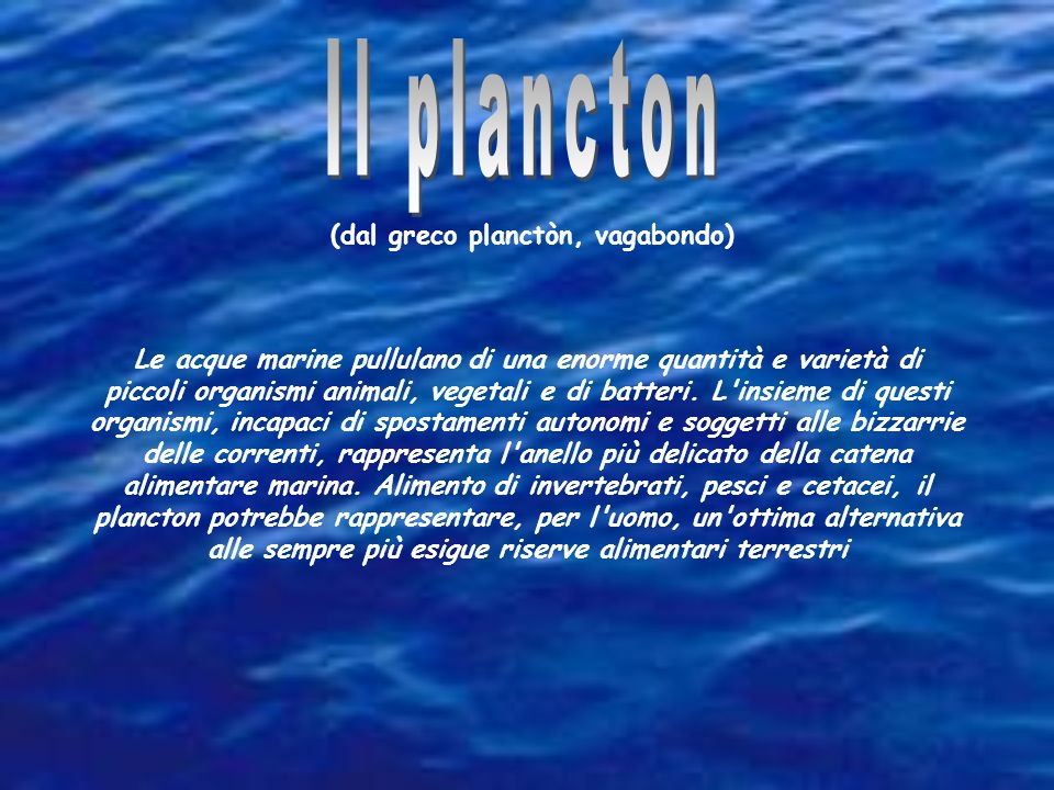 Il plancton (dal greco planctòn, vagabondo)