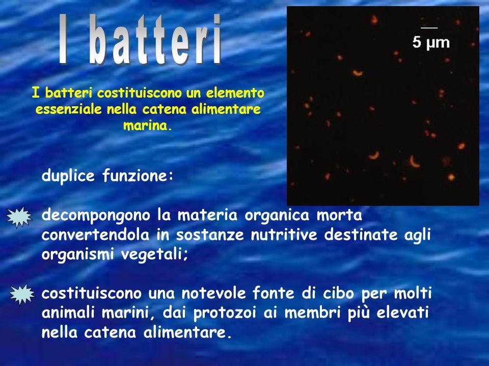 I batteri duplice funzione: