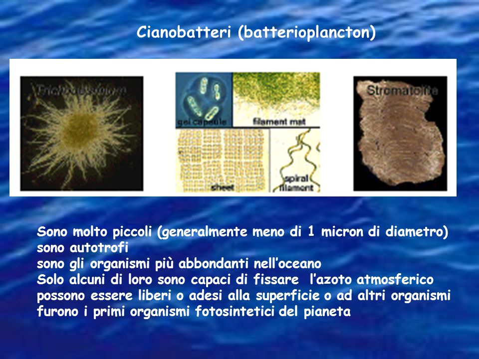 Cianobatteri (batterioplancton)