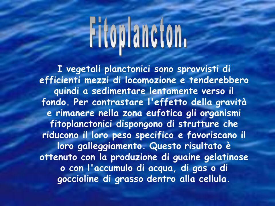 Fitoplancton.