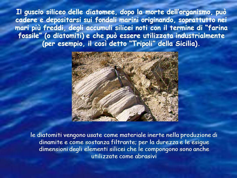 Il guscio siliceo delle diatomee, dopo la morte dell'organismo, può cadere e depositarsi sui fondali marini originando, soprattutto nei mari più freddi, degli accumuli silicei noti con il termine di farina fossile (o diatomiti) e che può essere utilizzata industrialmente (per esempio, il così detto Tripoli della Sicilia).