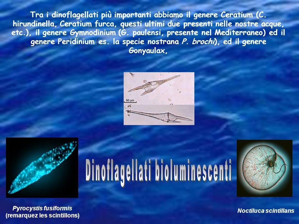 Dinoflagellati bioluminescenti