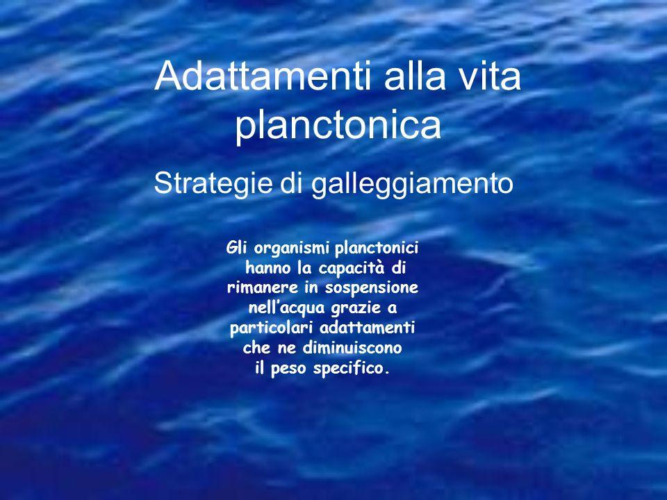 Adattamenti alla vita planctonica