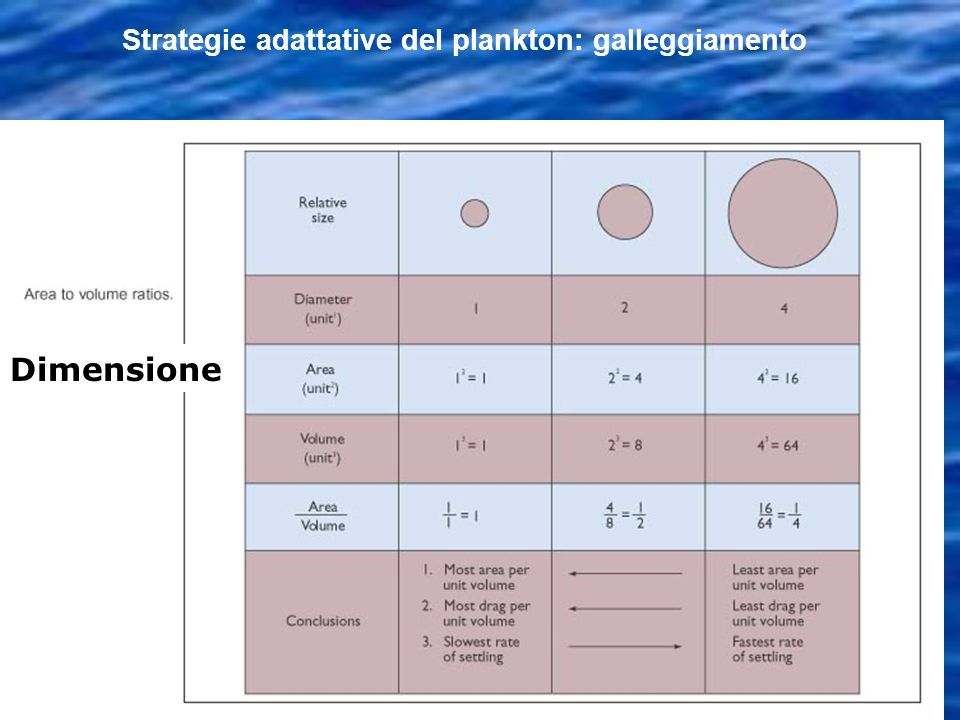 Strategie adattative del plankton: galleggiamento