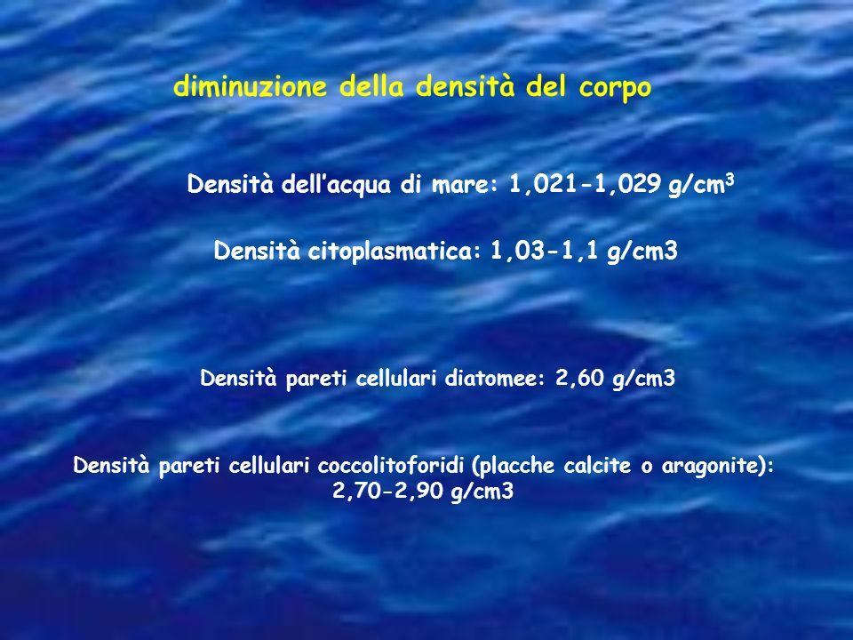 diminuzione della densità del corpo