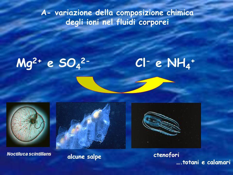 A- variazione della composizione chimica degli ioni nel fluidi corporei