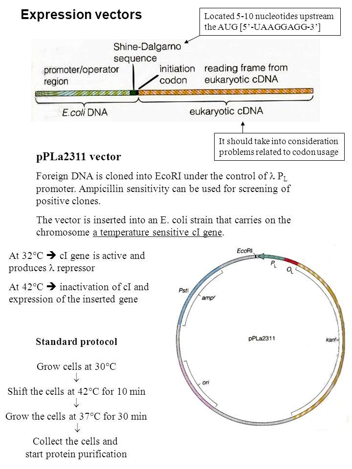 Expression vectors pPLa2311 vector
