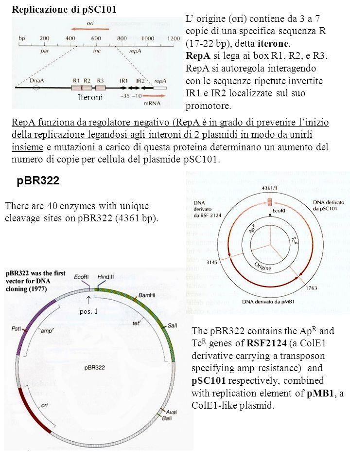pBR322 Replicazione di pSC101