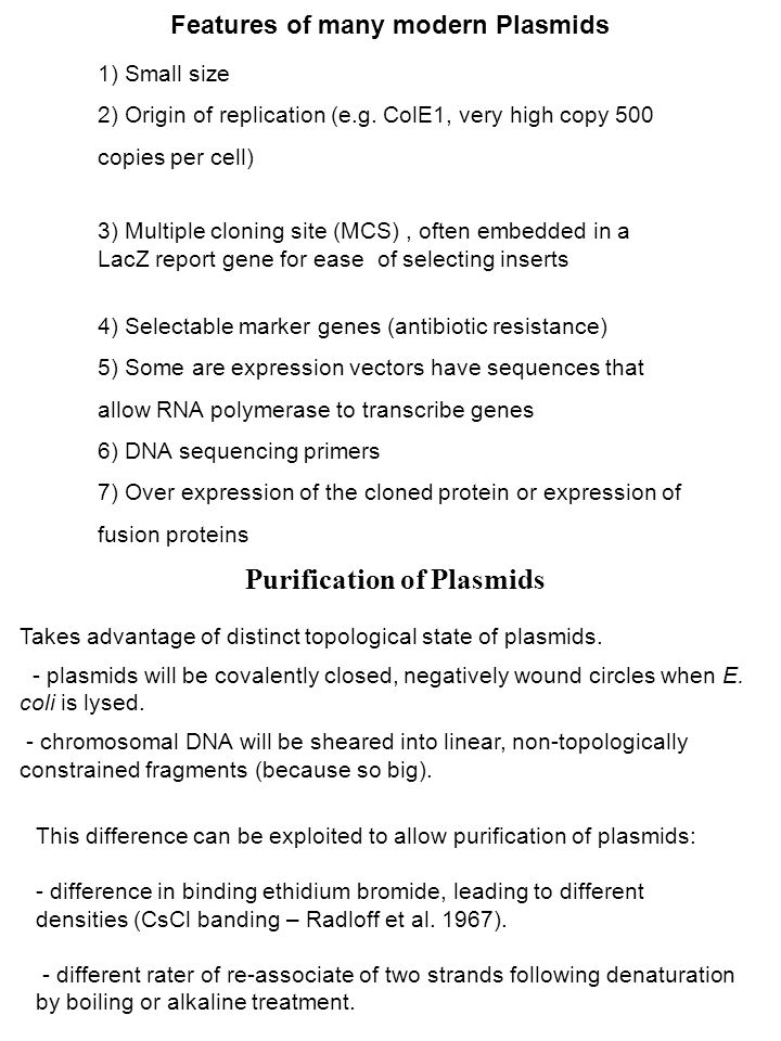 Purification of Plasmids