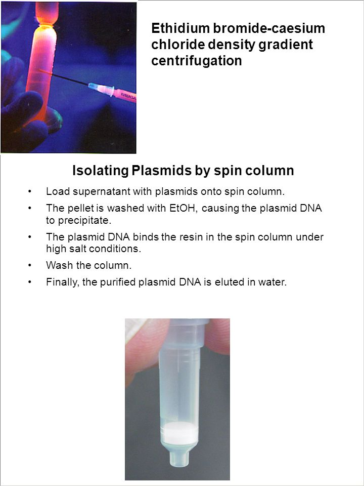 Isolating Plasmids by spin column