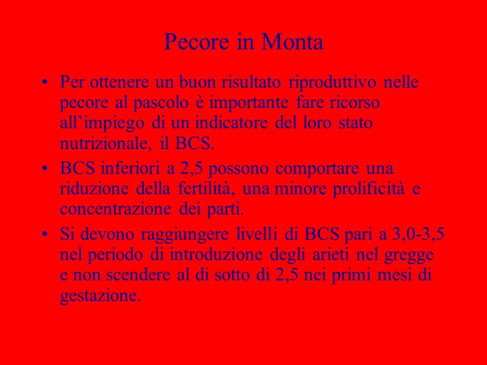 Pecore in Monta