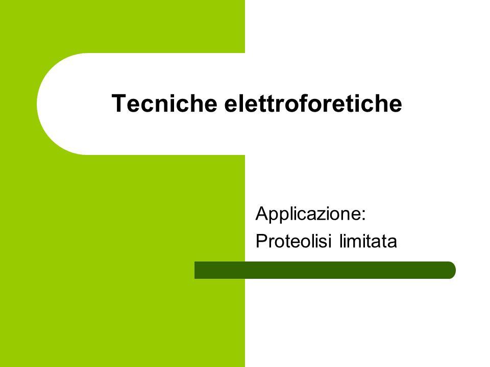 Tecniche elettroforetiche
