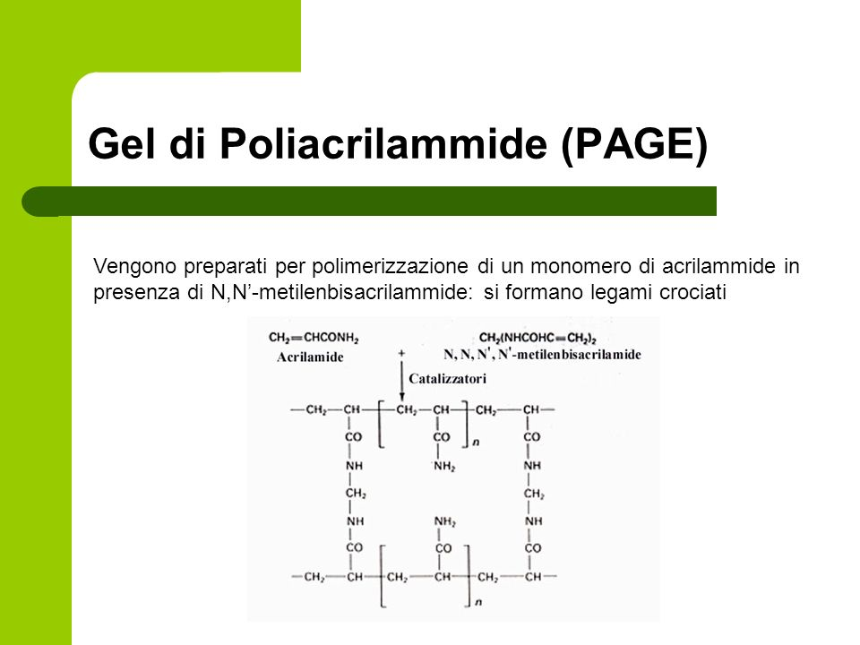 Gel di Poliacrilammide (PAGE)