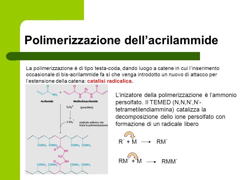 Polimerizzazione dell'acrilammide