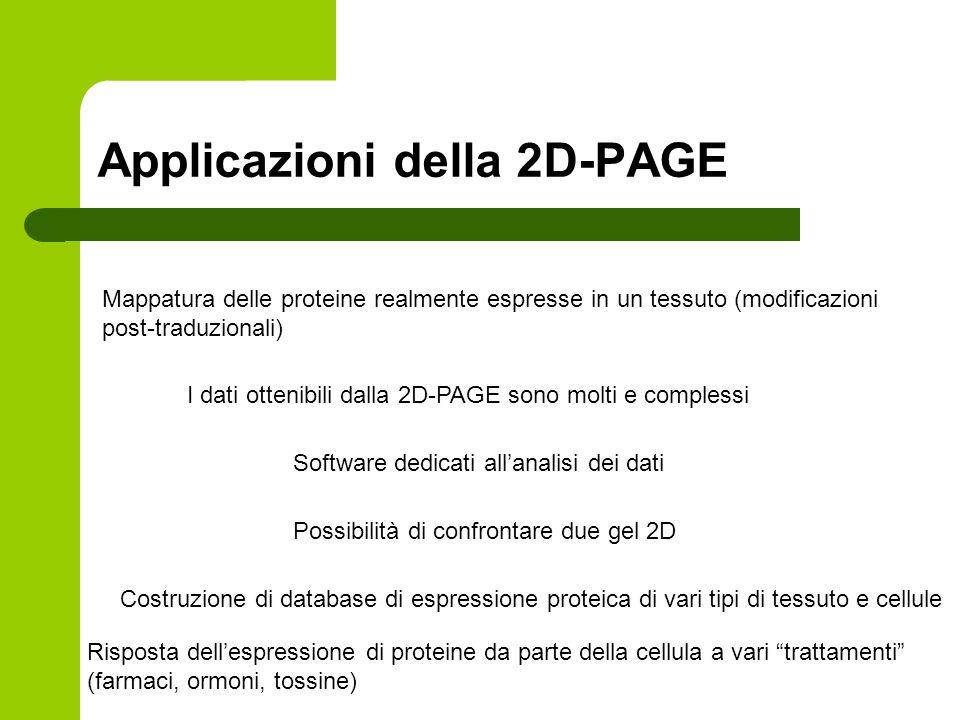 Applicazioni della 2D-PAGE