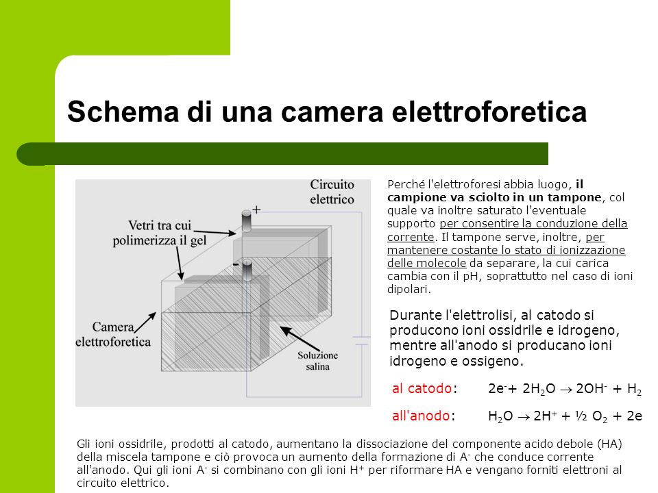 Schema di una camera elettroforetica
