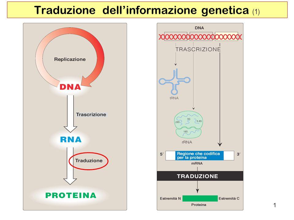 Traduzione dell'informazione genetica (1)