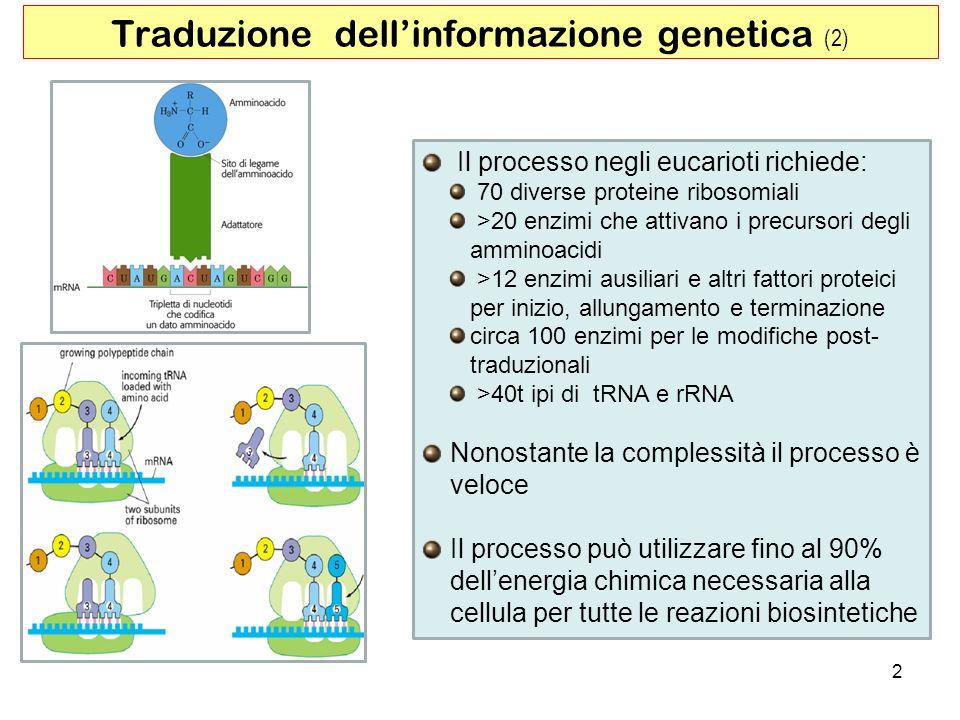 Traduzione dell'informazione genetica (2)