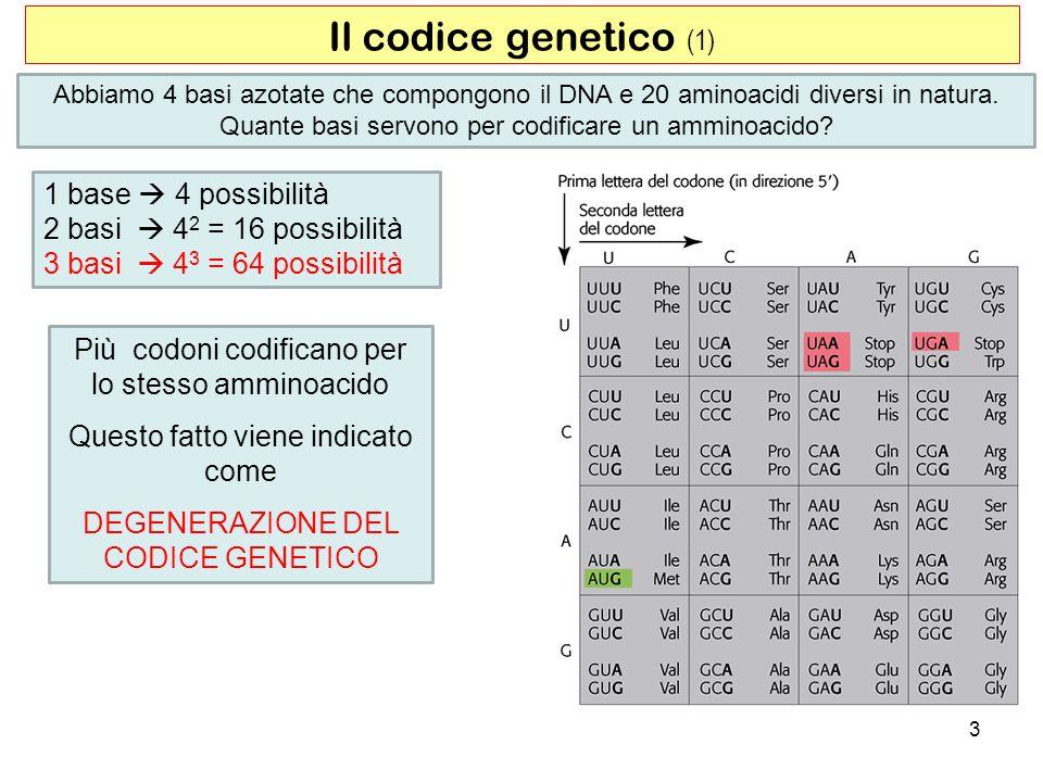 Il codice genetico (1) 1 base  4 possibilità