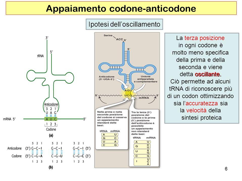 Appaiamento codone-anticodone